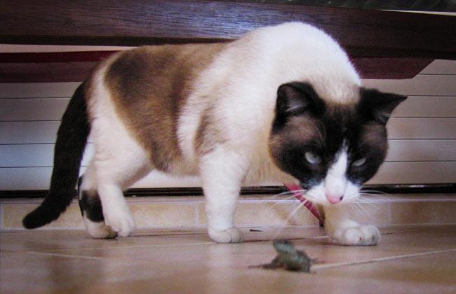 cat_lizard.jpg