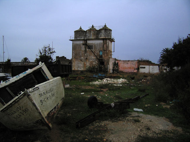 perros bravas, feral dogs in the abandoned village of Sancti Petri